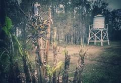 the floridian reserves... (HWW) (BillsExplorations) Tags: windmillwednesday windmill reserves water waterpump florida heritagepark old vintage farming palms historical park floridabotanicalgarden watertank