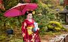 Mameryu - Maiko in Kyoto Tryptych 1 of 3 (JUNEAU BISCUITS) Tags: mameryu geisha kyoto gion portrait portraiture japan japanese nikon nikond810 hawaiiphotographer garden temple umbrella kimono