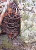 wire (yakfur) Tags: wv farn rainyday