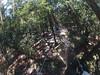 G0121255 (harleyhurricane1) Tags: line zip zipline ziplinepark dadecityflorida treehoppers centralflorida largestziplineparkincentralfl dadecity