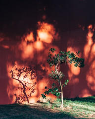 Lemon Dayz (Dionysos Digital) Tags: fineart tree photography a6000 sony sel55f18z barcelona red wall art still haze dayz lemon