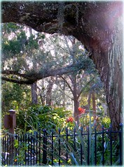 Sunlight Magic (Chris C. Crowley- Busy for a week or two!) Tags: sunlightmagic sugarmillgardens portorangeflorida garden scenic landscape trees southernliveoak fence wroughtironfence flowers sunlight bokeh foliage plants