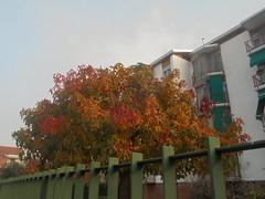 189 (en-ri) Tags: albero tree sony sonysti arancione foglie leaves giallo rosso