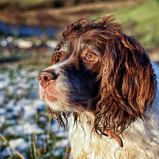 Mollie In The Winter Sun