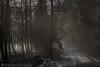 mystic mist (Christian Birzer) Tags: schnee nebel landschaft sonne himmel laub wolken blätter wald kalt mystisch winter grün dunkel weis baum pfad draussen idylle schwarz weg spur natur blau braun gegenlicht orange