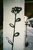 73290050 (alexdotbarber) Tags: 1375 28mm 35mm cdmx df kodakportra400 mexico mexicocity ricohgr1 analog autofocus colornegative flower pointandshoot streetart tile tiles wideangle
