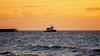 Tugboat (Michał Banach) Tags: caymanislands grandcayman island outdoor outside sea seashore seaside ship shore sunset tugboat water tug ocean sky boat