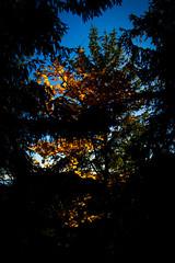 (c) Wolfgang Pfleger-8531 (wolfgangp_vienna) Tags: niederösterreich loweraustria austria österreich schneeberg schneebergland herbst autumn colorful bunt wald wiese blue blau blauerhimmel