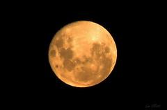 THE NIGHT AFTER THE SUPER MOON (Lani Elliott) Tags: nature naturephotography lanielliott sky lunar moon golden light bright beautiful superb excellent fantastic gorgeous wow