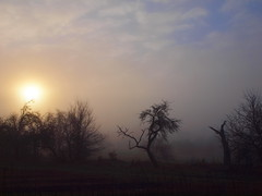 WONDERFUL MISTY MORNING P1271920 (hans 1960) Tags: mist misty morning trees sun sunrise sonne sonnenaufgang sol soleil atardecer treees bäume wiese obstbaumwiese himmel sky nebel farben colours soft stille stillness nature natur landschaft landscape licht light germany