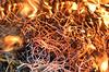 DSC_0066 (TCPuniverse) Tags: fire burning red orange hot ateş yellow ateşyakmak