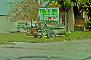 Tom's Sod Service,  Clearwater, Florida