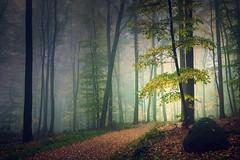 Path into the light (Rita Eberle-Wessner) Tags: forest wald nebel fog baum tree bäume trees weg path forestpath waldweg laub leaves stein rock atmosphere atmosphäre mysterious mysteriös geheimnisvoll odenwald