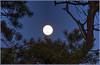 Full Moon with a Pinyon Pine Tree (Runemaker) Tags: pinyon pine tree pinusedulis capitolreef nationalpark utah nature nighttime moon fullmoon supermoon dark