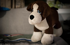 Stuffed Animals (kuntheaprum) Tags: stuffedanimals childrenstoys teddybears sharks turtles nikon d750 samyang 85mm f14