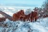 Paseo por el Adarra 2 (JaviSI) Tags: adarra nieve nikonistas valle caballos niebla montaña animal cielo paisaje árbol hierba olympus em1mark2 zuiko1240f28pro