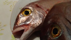 Fish eyes (RoBeRtO!!!) Tags: rdpic pink sea fish eye pesce rosa luvaro pagelluserythrinus paolotto mare occhio cibo food macro closeup