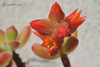 fiore (simoncella84) Tags: allaperto autdoor nature natura macro calma particolare particular flower flowers rosso fiore nikon1 nikon pianta fioritura primavera spring