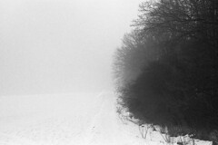 foggy hill (pedro4d) Tags: nikon f80 nikkor 241204 vr fuji fujifilm neopan 400 expired film analog self developed paterson aculux black white monochrome poznań poznan morasko polska natura zima nature winter poland polen landscape krajobraz landschaft nebel fog