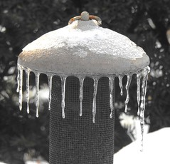2772ex3 fringe of ice (jjjj56cp) Tags: ice icy icicles frozen freeze winter february feeder cold wintry p900 jennypansing