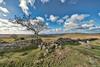 Hingston Down - Dartmoor (pm69photography.uk) Tags: hingstondown devon dartmoor fluffyclouds rugged moody moor moors southwest sony spooky sonya7rii a7rii atmospheric aurorahdr2018 atmosphere voigtlander voigtlanderheliarf56 voigtlanderheliar10mmf56 10mm