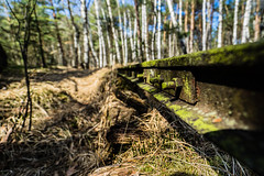 Where is my Train (*Capture the Moment*) Tags: 2017 bavaria bayern birches birke birken filzn fotowalk germany matthias natur nature railtrack rails railwaytrack sonya7m2 sonya7mii sonya7mark2 sonya7ii sonyfe1635mmf4zaoss tracks wideangle