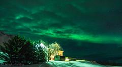 KarlsaNL (nordanheidar) Tags: skilodge karlsá dalvík iceland norhernlights auroraborealis aurora winter snow cold night nightphotography tree clouds