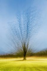 Zoom burst winter tree (alanrharris53) Tags: multiexposure tree winter calke abbey park parkland zoom burst stepped