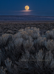 New Year Full Moon 2018 (chasingthelight10) Tags: events photography landscapes highdesert nightphotography moon places oregon centraloregon pinemountain otherkeywords moonrise