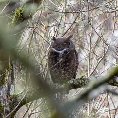_DSC6229.jpg (kasperisummanen) Tags: birds nisquallynationalwildliferefuge wa pnw wildlife
