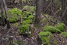 Forest floor (edk7) Tags: nikond300 edk7 2008 canada ontario caledon forksofthecredit niagaraescarpmentunescoworldbiospherereserve forest tree moss leaf trunk foliage rock boulder landscape nature rural country countryside geology limestone