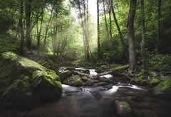Magical Forest Lighting (josht712) Tags: park state fork rocky canon tennessee water longexposure trail creek stream hiking hike ngc nature landscape light forest