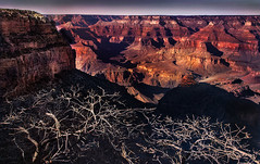 Grand Canyon: Winter Light and Shadows (D'ArcyG) Tags: grandcanyon sun walls rocks mountains sunset dusk branches highcontrast arizona bushes trees shadows winter