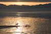 Salt Lake Wildlife (joshhansenmillenium) Tags: saltair salt lake city utah great mountains clouds travel water reflections nikon d5500 nikond5500 tamron 18200mm wildlife adobe