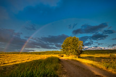 Double Rainbow (Brian Kushniruk) Tags: rainbow trees clouds landscape