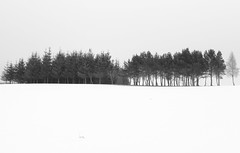 less is more (photography by Paul Reid) Tags: snow scotland bla blackandwhite blackwhite mono grey trees tree crop greyscale canon canon60d flickr500 minimum lessismore nature