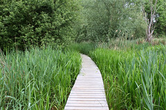 Het Vinne (juka14) Tags: beautifulplaces belgium zoutleeuw lake nature bird