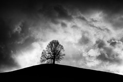 solitary on a hill... (ibo.h) Tags: hill solitary bw clouds stormy winter aoi elitegalleryaoi bestcapturesaoi aoi3levels
