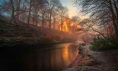 Forest on Fire (Adam West Photography) Tags: adamwest amber beautiful beauty bleak cold flora fog freezing glasgow glow gold golden ice kelvin landscape midwinter mist nature river scotland sun travel trees uk winter