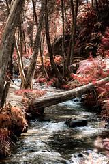 (Didier Castaño) Tags: arboles tree paisaje red nature natura love ambiente colombia medellin bosque river rio tronco landscape