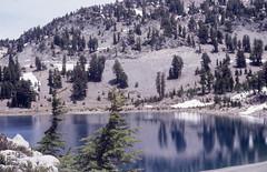 Mountain Lake, Mountain hemlock, near Start of Bumpass Hell (Mary Gillham Archive Project) Tags: 1987 87233 california lassenvolcanicpark mountainhemlock planttree snowice tsugamertensiana usa water
