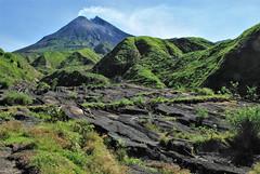 DSC_0162g (Tartarin2009) Tags: indonesia java indonésie merapi volcano volcan lave lava field champdelave travel nikon d80 nature landscape paysage