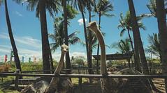 Island Cove Cavite Mermaid Go Kart Fishing Village (10 of 66) (Rodel Flordeliz) Tags: islandcove islandcovecavitecavite gocarting imuscavite smmoa islancove gilbertremulla mermaid belikeamermaid gokart horsebakcriding python snake amenities rooms spa fishingvillage