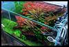 ADA Solar RGB - ROCKS! (viktorlantos) Tags: aquascape aquascaping aquarium aquascapingshopbudapest adahungary aquadesignamano ada aquariumplants plantedaquarium plantedtank plantedaquariumgallery greenaquagallery greenaquahungary adasolarrgb redcolor natureaquariumgoods nature inspiration aquariumphotography underwaterphotography colors interior interriordesign