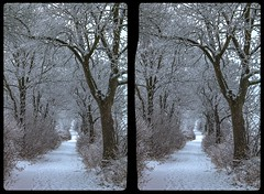 Pathway in snow 3-D / CrossEye / Stereoscopy / HDR / Raw (Stereotron) Tags: winter snow schnee kälte cold ice freezing frost saxony sachsen vogtland crosseye crosseyed crossview xview cross eye pair freeview sidebyside sbs kreuzblick 3d 3dphoto 3dstereo 3rddimension spatial stereo stereo3d stereophoto stereophotography stereoscopic stereoscopy stereotron threedimensional stereoview stereophotomaker stereophotograph 3dpicture 3dglasses 3dimage canon eos 550d chacha singlelens kitlens 1855mm tonemapping hdr hdri raw