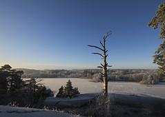_MAL3381 (Markoliini) Tags: nikon d800e tamron 1530 luonto natur nature trä puu järvi lake sjö landskap landscape maisema vinter talvi winter is ice jää