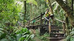 Caminho do Itupava (clodo.lima) Tags: ponte nature natureza caminhodoitupava floresta mata paz woodbridge bridge itupavaspath hiking trilha