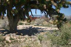 Building and Joshua Tree, OX Ranch #2 (fernside) Tags: mojave desert california oxranch ruin joshuatree