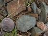 Beartooth metakomatiite 6 (cc4t) Tags: archean beartooth beartoothhighway beartoothmountains carboncounty extrusive geology highway igneous komatiite linecreek linecreekplateau metamorphic metamorphosed montana mountains plateau serpentinite spinifex ultramafic xenolith