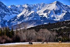 THE GOOD EARTH (Aspenbreeze) Tags: sandjuanmountains colorado coloradolandscape mountains snowypeaks peaks horses nature rural mountainscape bevzuerlein aspenbreeze moonandbackphotgraphy